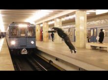 Russo dá mortal na frente de trem em movimento e acaba se dando muito mal